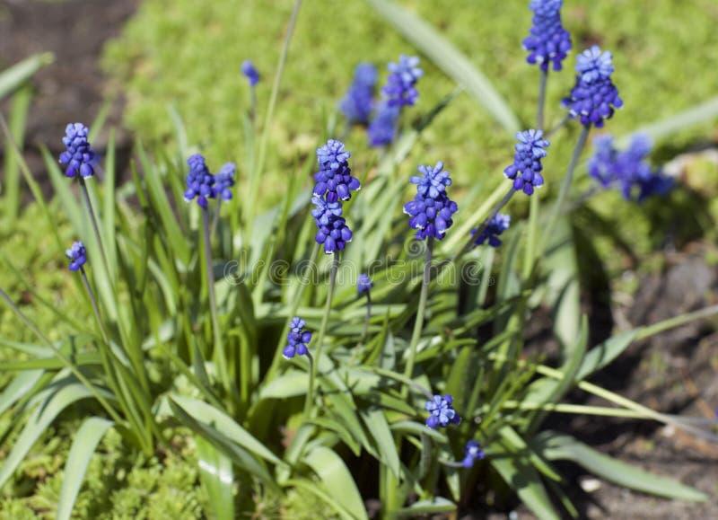 Download Błękitne kwiaty zdjęcie stock. Obraz złożonej z kwiat - 53781706