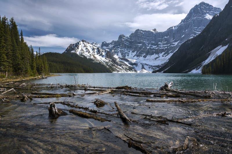 Błękitnego Chephren Driftwood wody szczytów Banff Halnego Jeziornego Odległego parka narodowego Kanadyjskie Skaliste góry fotografia stock