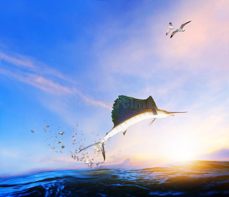Błękitnego, czarnego marlin ryba skacze w połowie powietrze nad błękitnym morzem, i morze fotografia stock