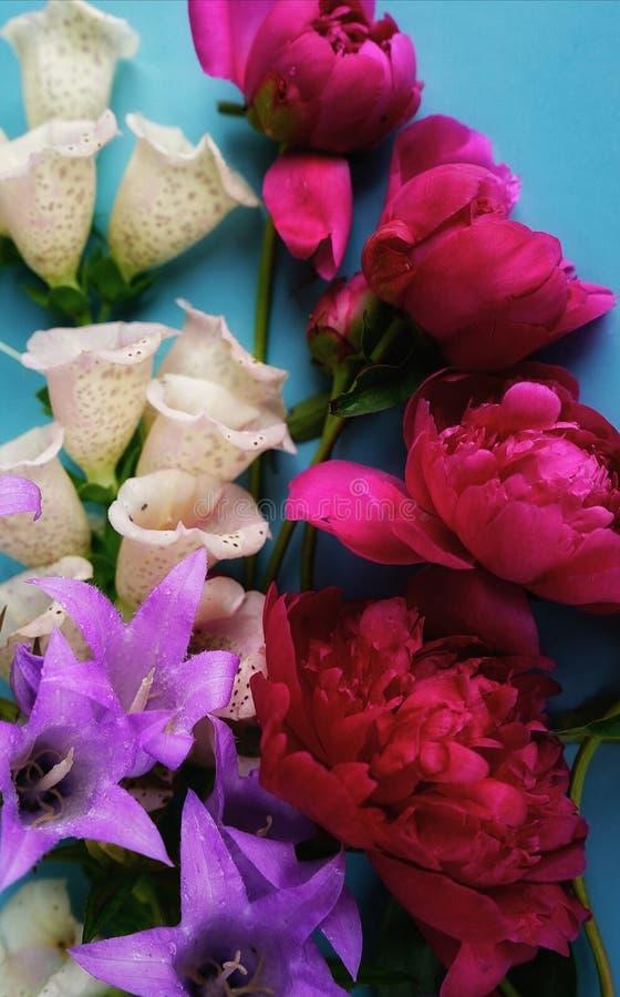błękitnej kolorów tło czerwonej peoni digitalisu błękita biali bellflowers obraz stock