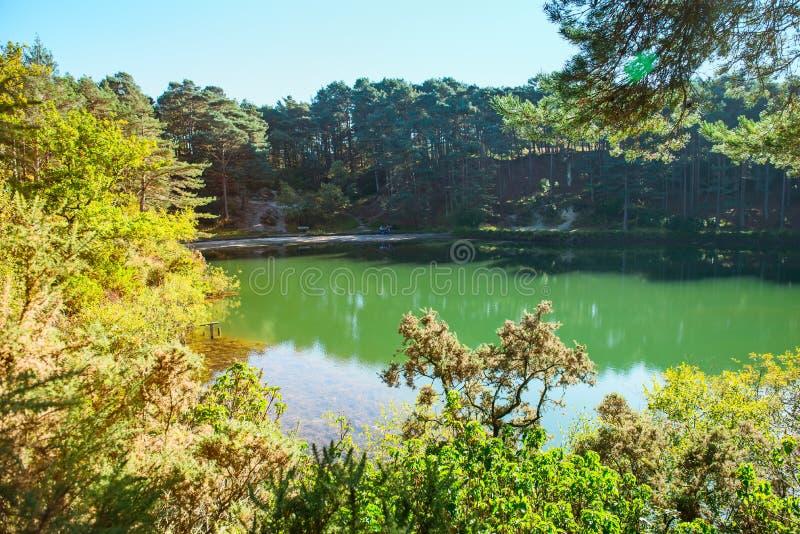 Błękitnej zieleni woda w lasowym jeziorze z sosnami jasny dzień świeci słońce Błękitny poole, Anglia zdjęcie stock