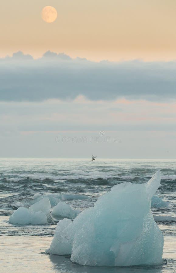 Błękitni góry lodowa, księżyc, ptak i morze, obrazy royalty free
