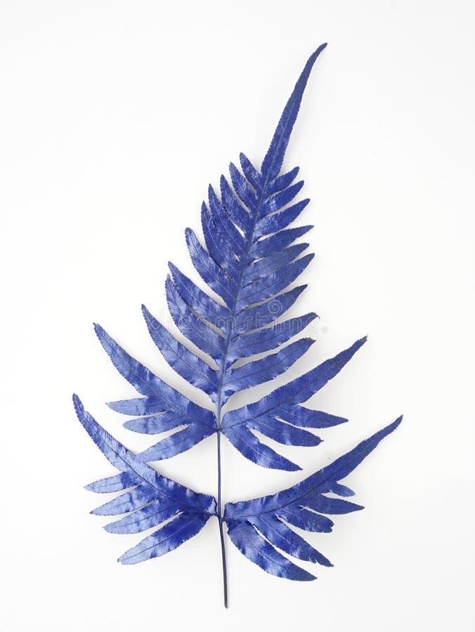 Błękitni liścia projekta elementy Dekoracja elementy dla zaproszenia, ślubne karty, valentines dzień, kartka z pozdrowieniami Odi zdjęcie stock