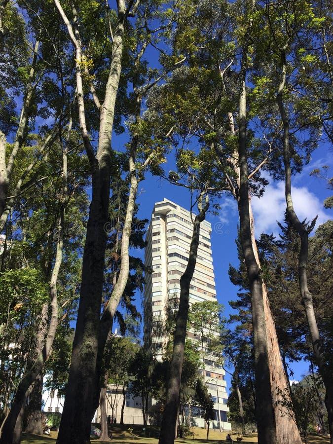 Błękitni miast drzewa zdjęcia royalty free