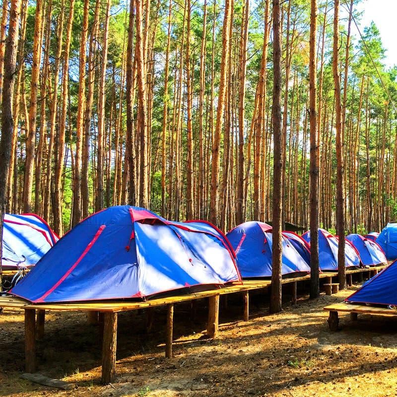 Błękitni namioty harcerze lub turyści w lesie na drewnianym platfor obrazy stock
