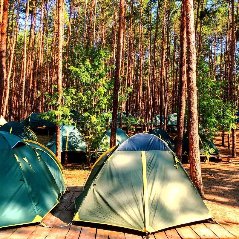Błękitni namioty harcerze lub turyści w lesie na drewnianym platfor zdjęcia royalty free