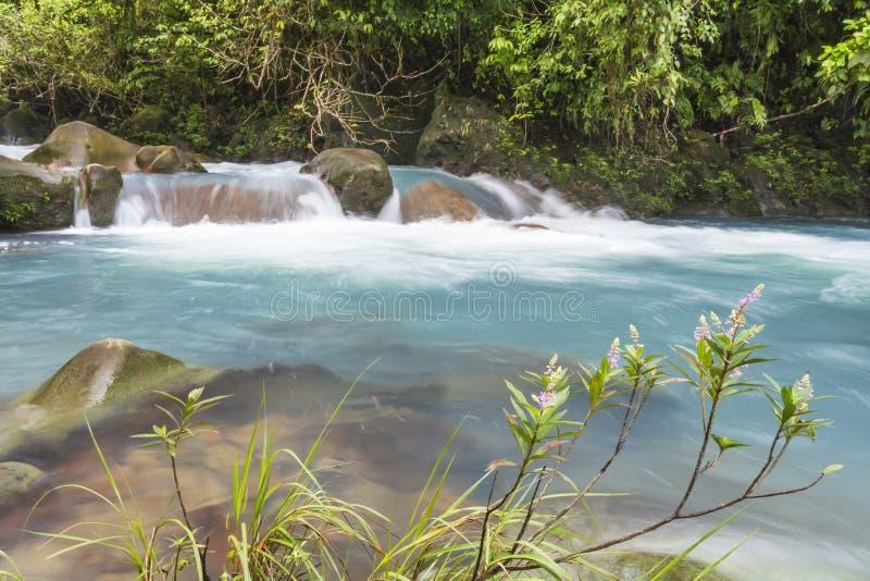 Błękitni rzeki i menchii kwiaty zdjęcia stock