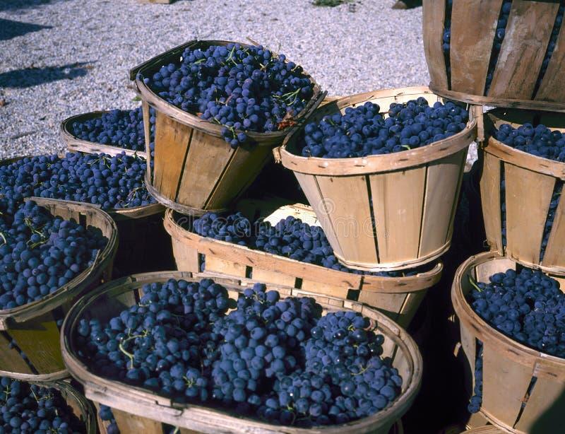 Błękitni win winogrona w łozinowych koszach fotografia royalty free