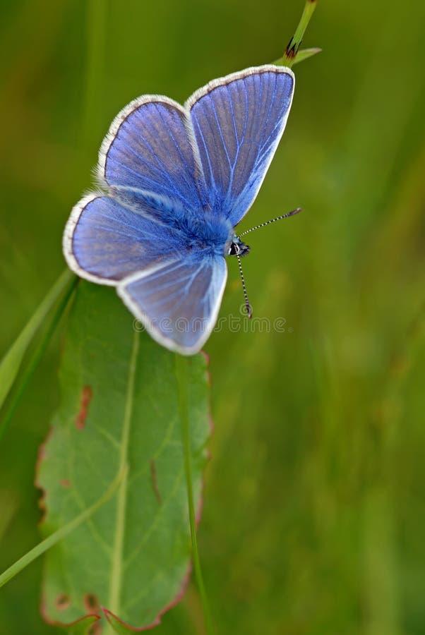 błękitny błonie fotografia stock