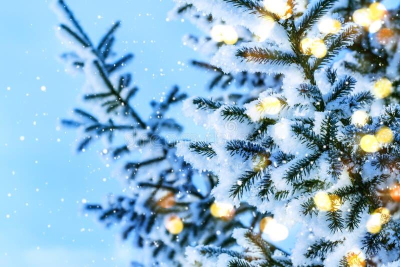Błękitny Bożenarodzeniowy czarodziejski tło Naturalne iglaste gałąź z światłami i śniegiem obrazy royalty free