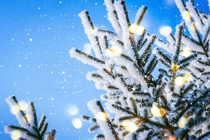 Błękitny Bożenarodzeniowy zimy czarodziejki tło Śnieżne iglaste gałąź z światłami zdjęcia royalty free