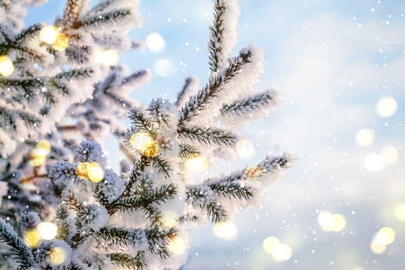 Błękitny Bożenarodzeniowy zimy tło Naturalne iglaste gałąź w hoarfrost z światłami i śniegiem fotografia stock
