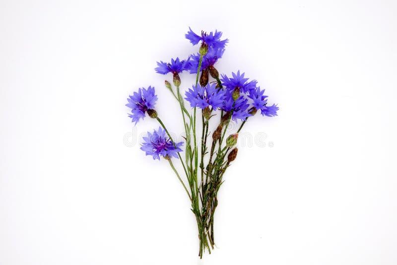 Błękitny Chabrowy ziele lub kawalera guzika kwiatu bukiet odizolowywający na białej tło wycinance obraz stock