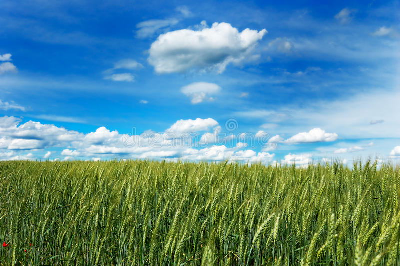 błękitny chmurna pola zieleni nieba banatka obrazy royalty free