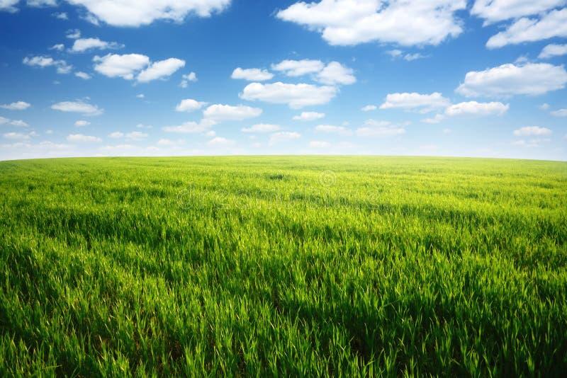 błękitny chmurny śródpolny trawy zieleni niebo obraz royalty free