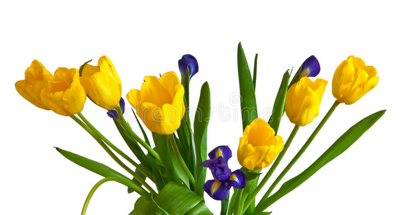 błękitny ciemny irysów tulipanów kolor żółty fotografia royalty free