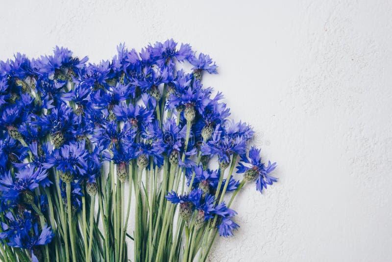 Błękitny cornflowers bukiet, lato kwitnie na białym tle, kwiecisty tło, piękni mali cornflowers zamknięci w górę zdjęcia royalty free