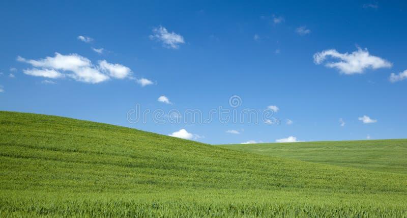 błękitny dzień pola zieleni nieba lato obraz stock