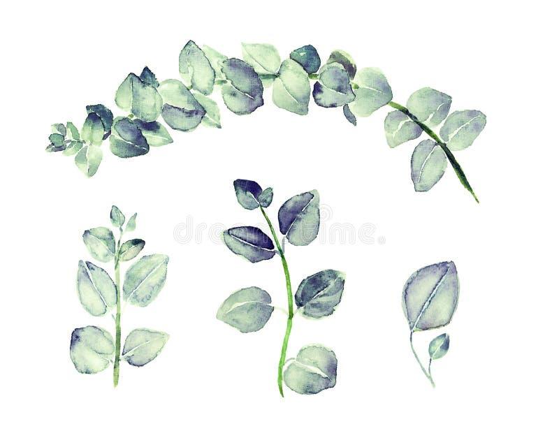 Błękitny Eukaliptusowy tetragona rozgałęzia się z modrozielonymi liśćmi ustawiającymi, ręka malująca akwareli ilustracja ilustracji