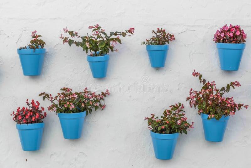 Błękitny flowerpot na ścianie obrazy stock