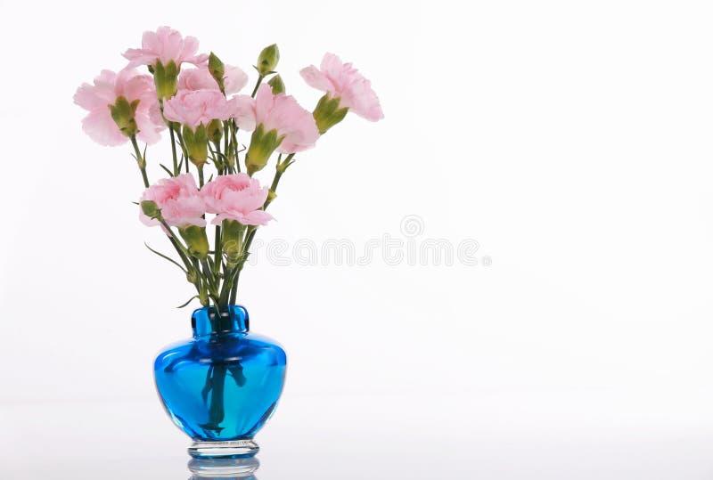 błękitny goździków różowa waza obrazy stock