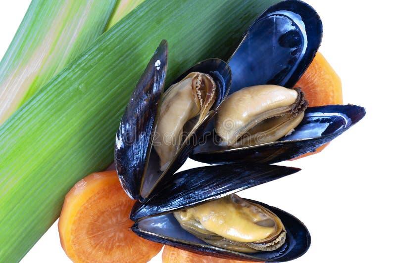 błękitny gotujący odosobneni mussels trzy zdjęcie stock