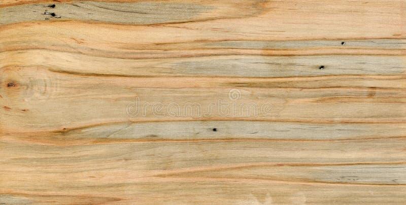 Błękitny i pomarańcze paskujący spalted drewno obraz royalty free