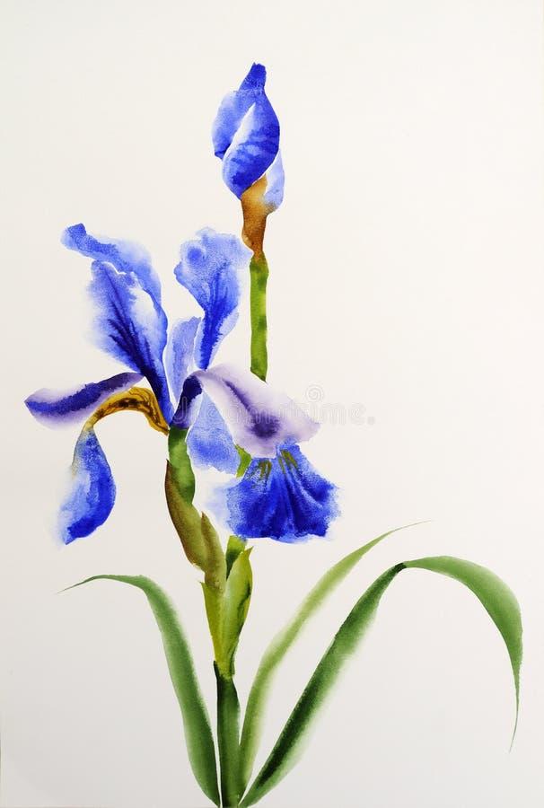 Błękitny irys ilustracji