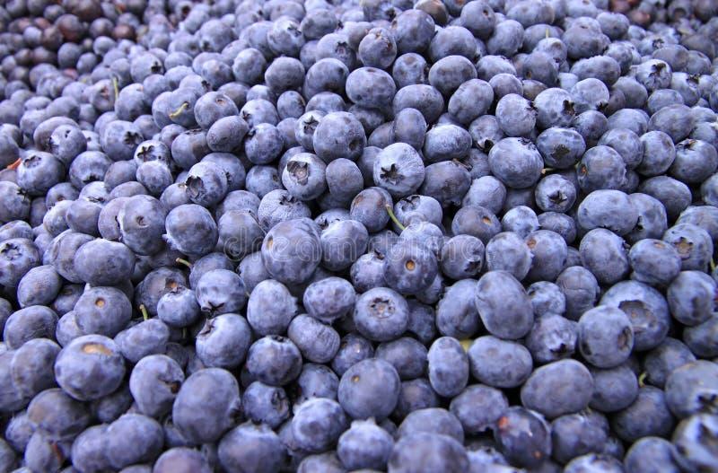 błękitny jagoda kosze obraz stock