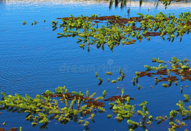Błękitny jezioro z zielony roślinności unosić się obrazy royalty free