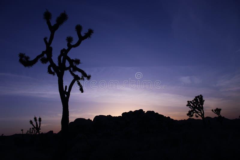 błękitny Joshua sylwetki nieba zmierzchu drzewo obraz royalty free