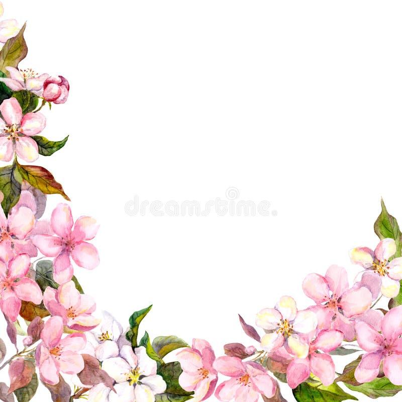 błękitny karcianego projekta kwiecisty powitanie Biel, różowi czereśniowi Sakura kwiaty akwarela royalty ilustracja
