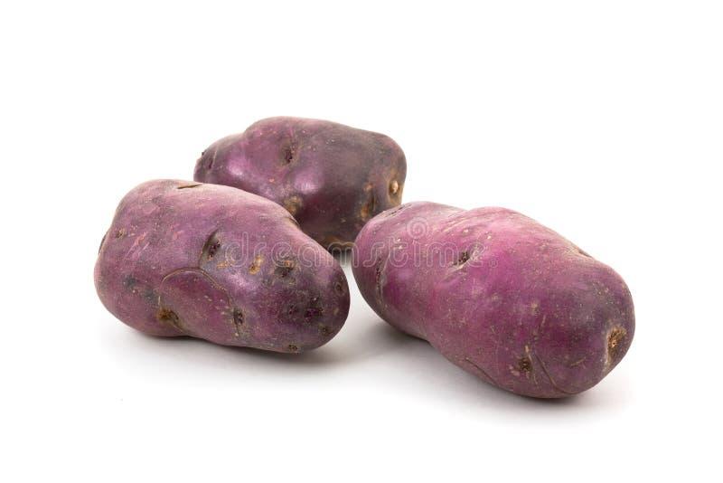 błękitny kartoflany vitellotte obraz royalty free