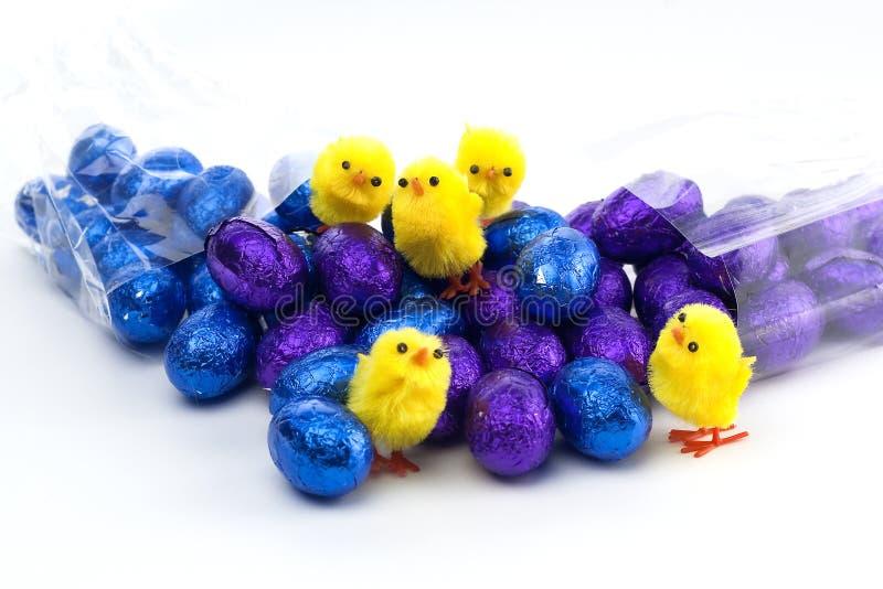 błękitny kurczątek Easter jajek purpur kolor żółty obraz royalty free