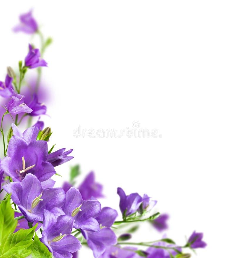 błękitny kwiaty obrazy royalty free