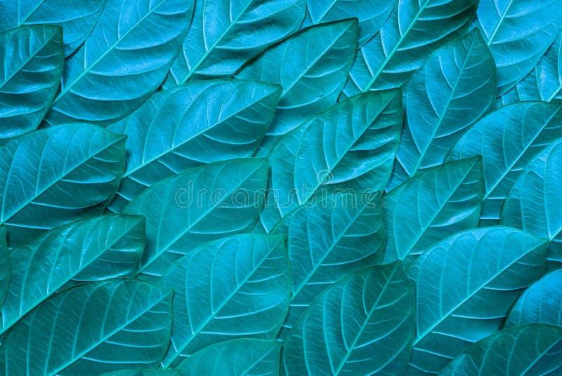 Błękitny liścia wzoru tło obraz royalty free