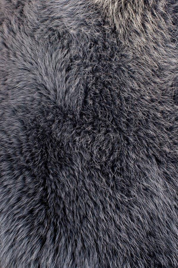 błękitny lisa futerka szara biegunowa tekstura fotografia stock
