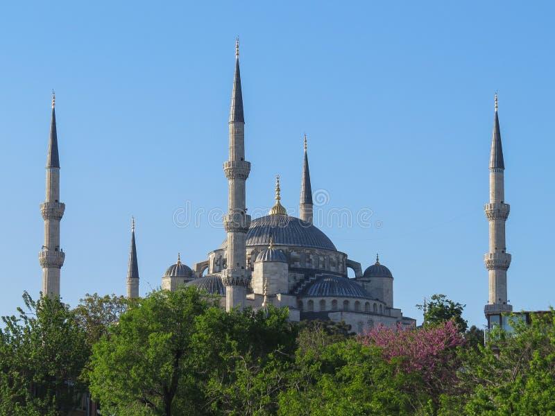 Błękitny meczet w Istanbuł, zanurzonym w greenery obraz stock