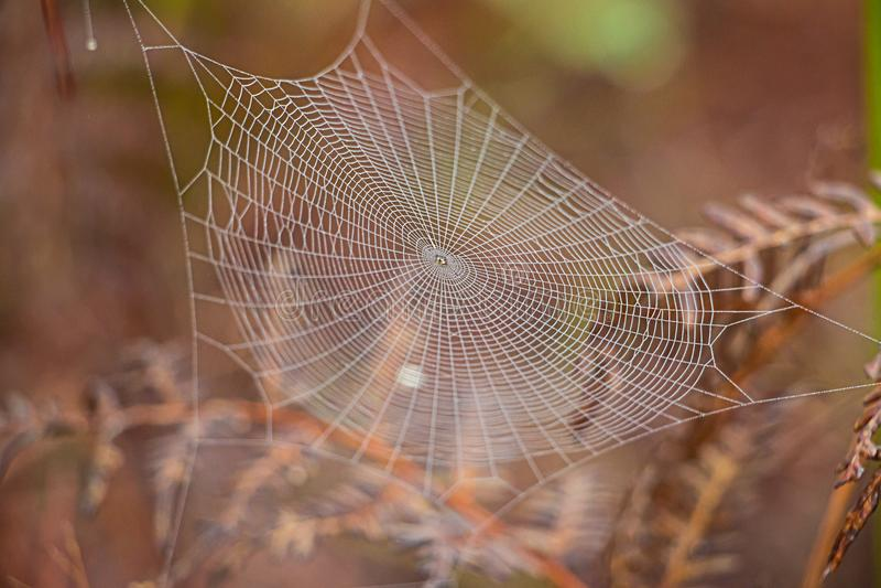 błękitny miękka pająka odcienia sieć obraz stock