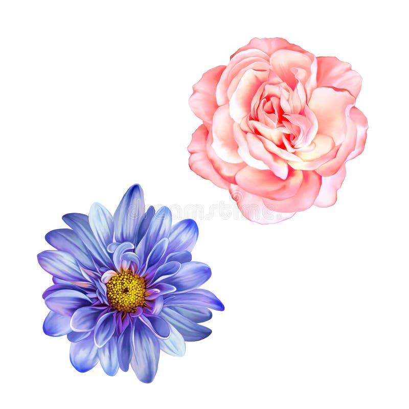 Błękitny Mona Lisa kwiat, menchii róża, wiosna kwiat ilustracja wektor