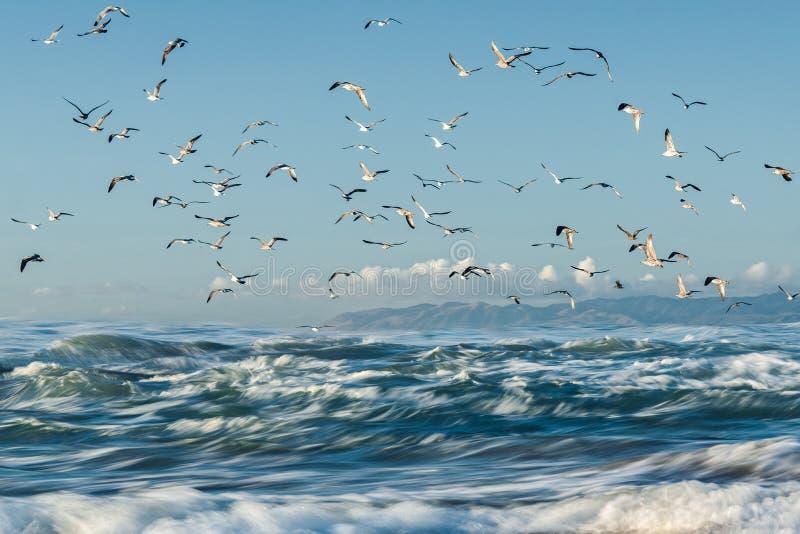 Błękitny morze, chmurny niebieskie niebo i kierdel ptaki, zdjęcia royalty free