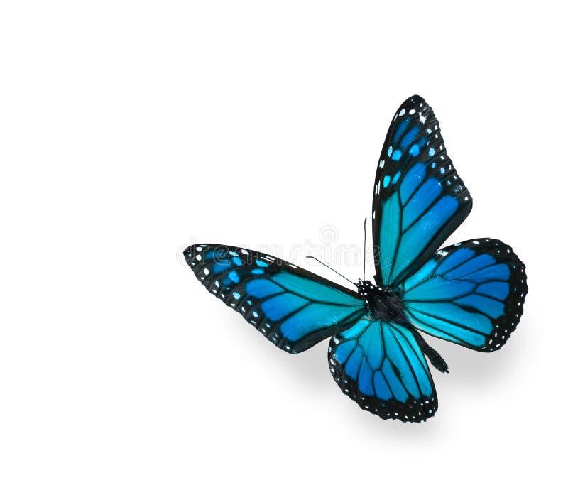 błękitny motyla zieleni odosobniony biel fotografia stock