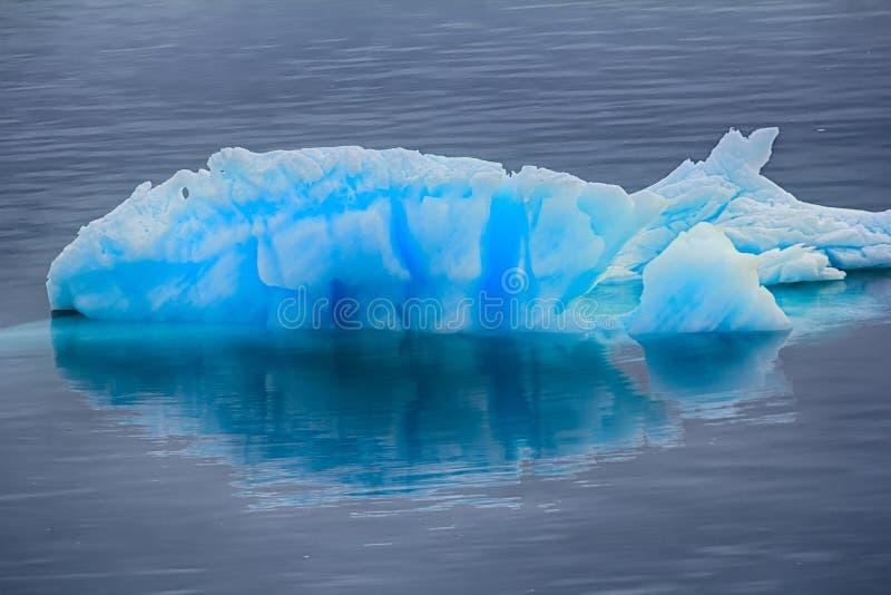 Błękitny mruk z odbiciem w spokój wodzie (kawałek góra lodowa) fotografia royalty free
