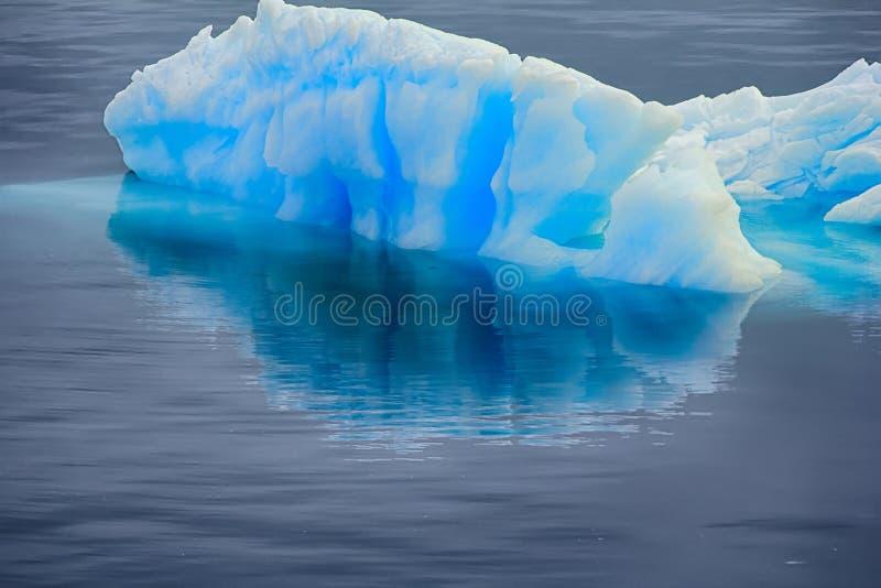 Błękitny mruk z odbiciem w spokój wodzie (kawałek góra lodowa) obrazy royalty free