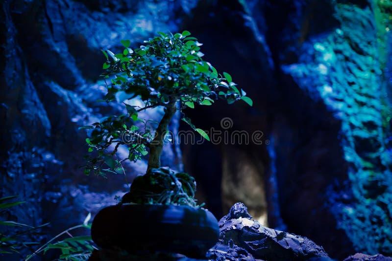 Błękitny nastroju drzewo życie zdjęcia royalty free