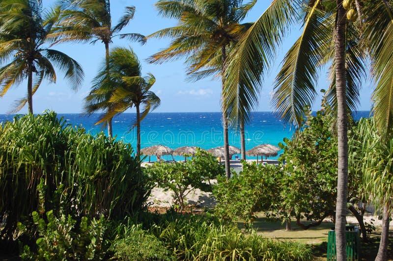 Błękitny ocean i drzewko palmowe raj z Cabana budami zdjęcia stock