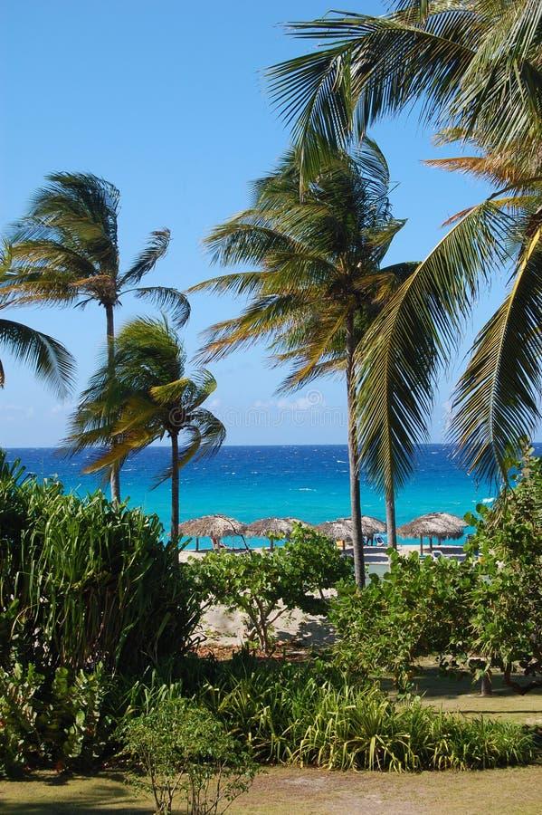 Błękitny ocean i drzewko palmowe raj z Cabana budami zdjęcie royalty free