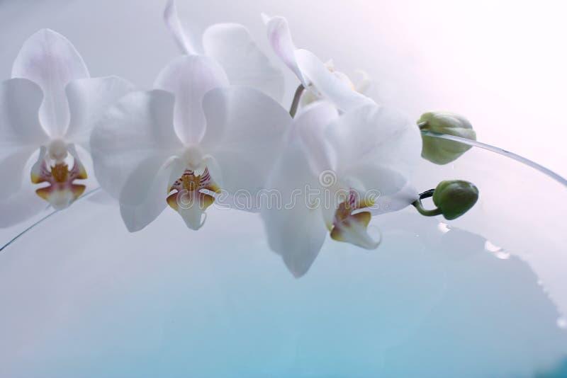 błękitny orchidea zdjęcie stock