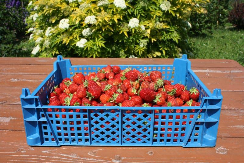 błękitny pudełka strawberryes stół zdjęcie royalty free