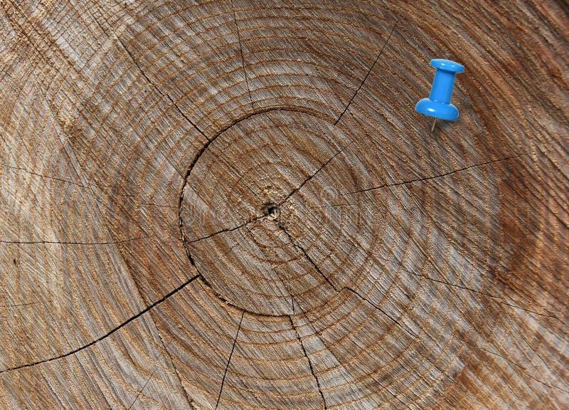 Błękitny thumbtack w crosscut drzewie fotografia stock